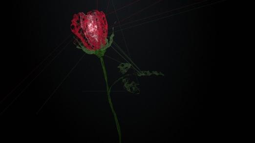 Rose_HP2